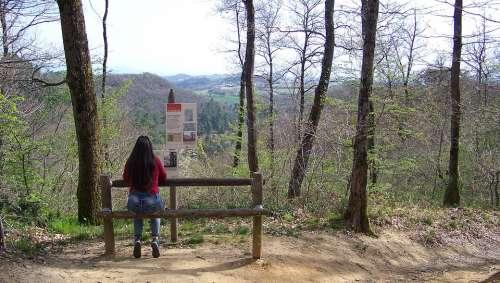 Forest Meditation Reverie Nature Calm Landscape