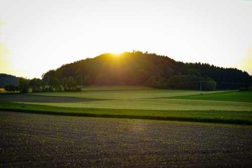 Forest Meadow Fields Field Of Rapeseeds Sunset