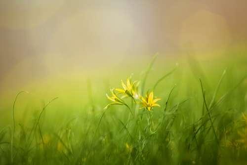 Grass Field Nature Summer Spring Beauty Yellow