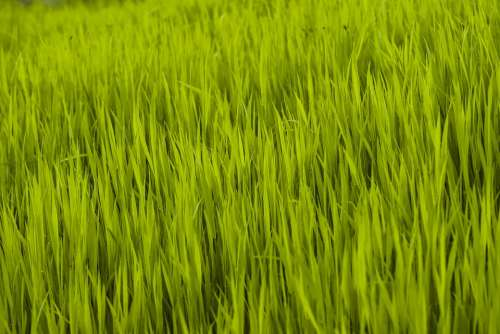 Grass Green Nature Spring Meadow