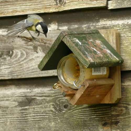 Great Tit Bird Fauna Bird Feeder Food Fly Tit