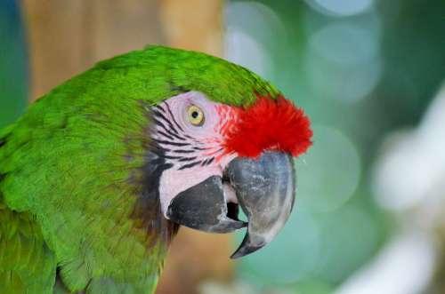 Green Macaw Bird Parrot Ara Green Nature Color