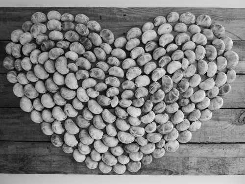Heart Intended Valuable Shells Shape