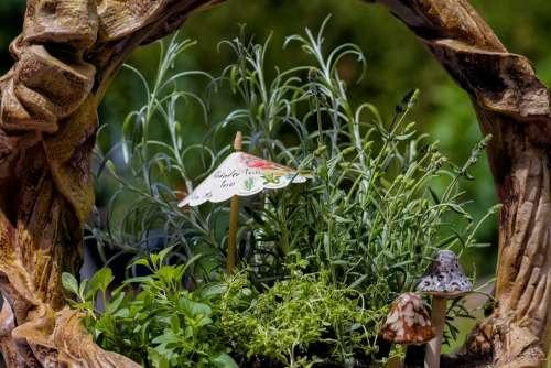 Herbs Bio Rosemary Thyme Oregano Healthy