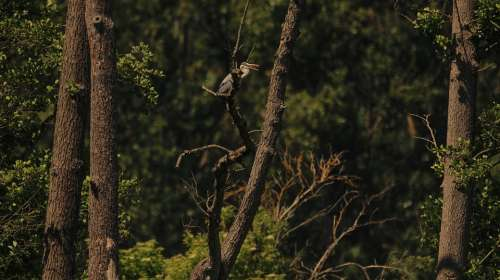 Heron Tree Nature Animal World Bird Bill