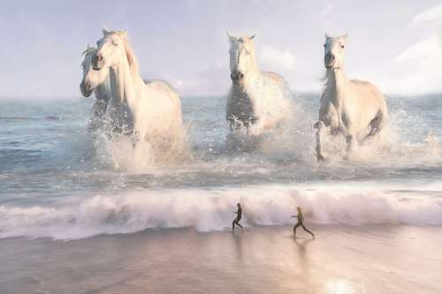 Horses Sea Beach Fantasy Sunset Water Mood