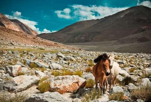 Horses Mountains Landscape Nature Clouds Fantasy