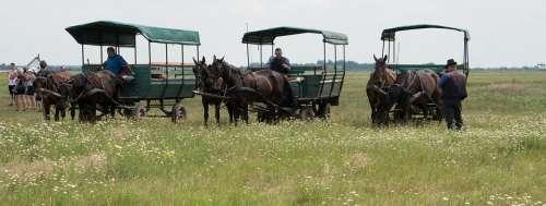 Hortobágy Hungary Great Plains Plains Stud