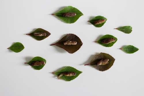 Insect Eat Animal Beetle Exotic Wing Macro