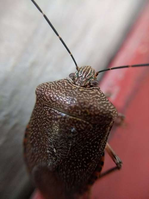 Insect Nature Antenna Feeler