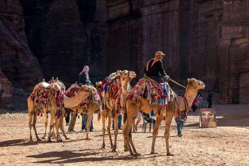 Jordan Petra Camel Dromedary Desert People