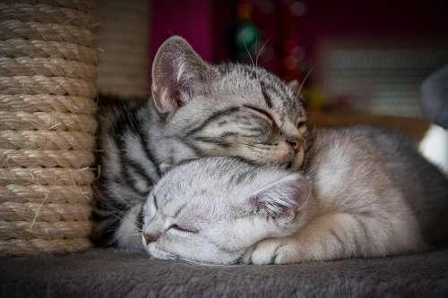 Kitten Cat Sweet Charming Cute Pet Baby Cat