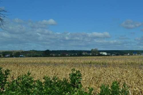 Landscape Gold Bright Wheat Blue Sky Field