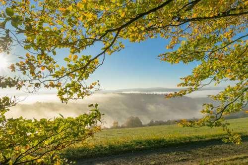 Leaves Fog Nature Tree Landscape Mood
