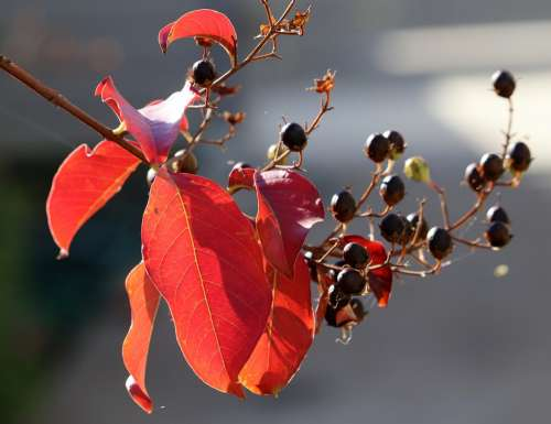 Leaves Seeds Branch Autumn Colorful Tree Garden