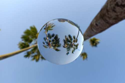 Lensball Sphere Palm Tree Invert Mirror