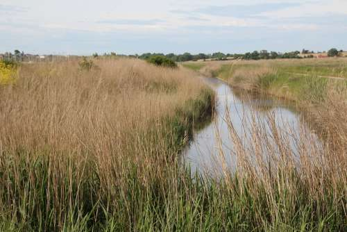 Marais Poitevin Marsh River Water Wild Nature