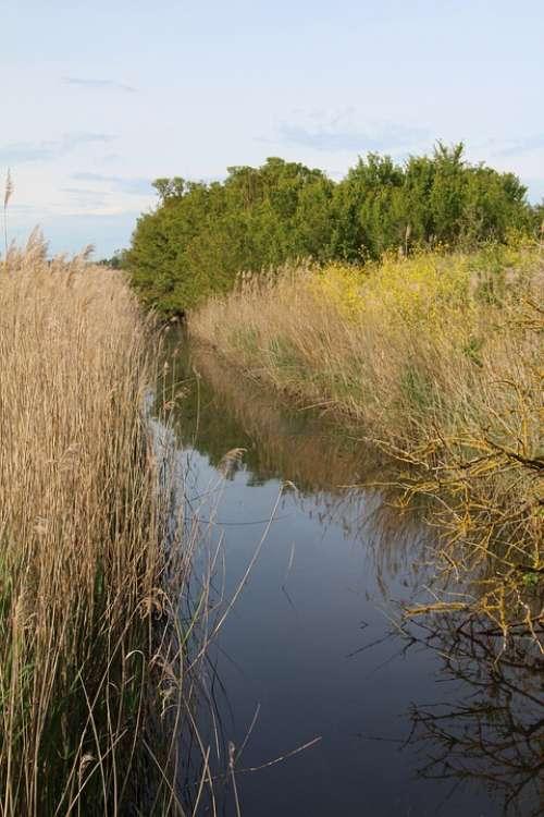 Marais Poitevin Marsh Nature Wild Charente River