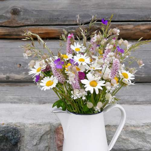 Meadow Daisies Strauss Nature Flower White