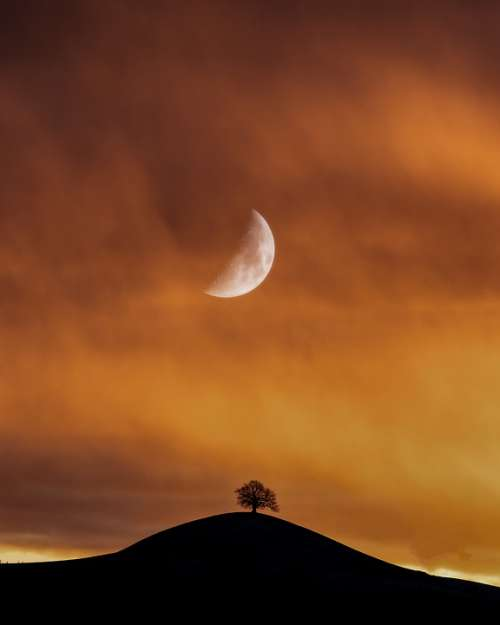 Moon Lonely Tree Landscape Sky Mood Loneliness