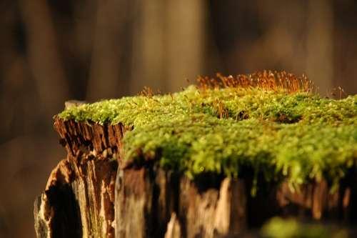 Moss Forest Stump Wood