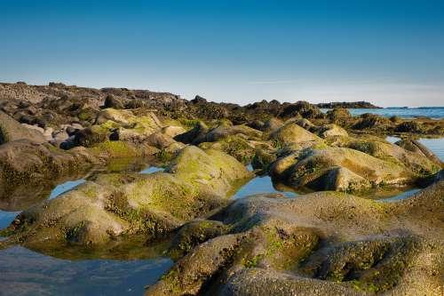 Moss Seaweed Water Nature Bank Bemoost Coast