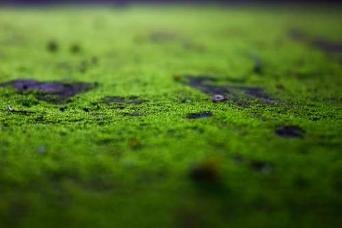 Mosses Moss Green Mos Pa Autumn Mushroom