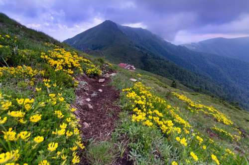 Mountain Peak Sky Flowers
