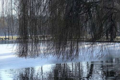 Munich Park Lake Tree Aesthetic Coloring Water