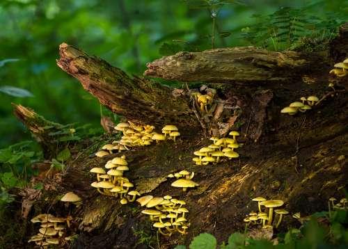 Mushroom Mushrooms Sponge Moss Small Mushroom
