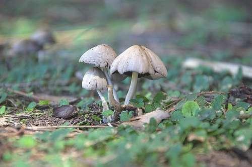 Mushrooms Nature Forest Woods Autumn Moss Fungus
