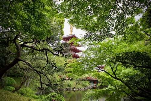 Nature Pagoda Temple Japan Garden