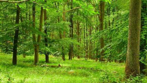 Nature Tree Green Summer Forest Plant Landscape