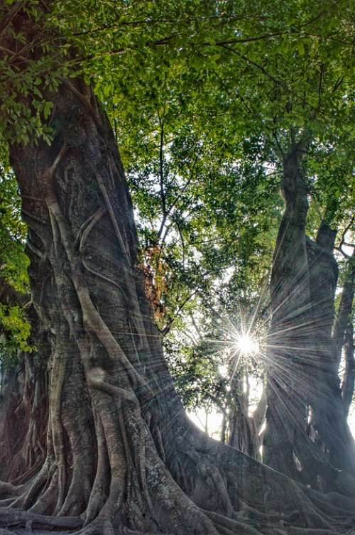 Nature Tree Green Landscape