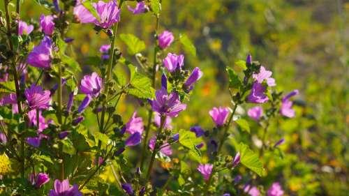 Nature Plants Flowers Violet