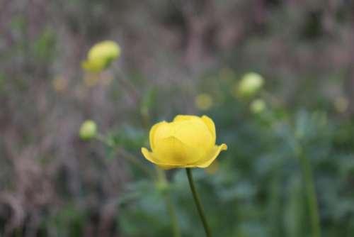 Nature Wild Yello Flower Wildflower Background