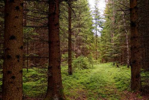 Nature Forest Landscape Trees Green Mood Wood