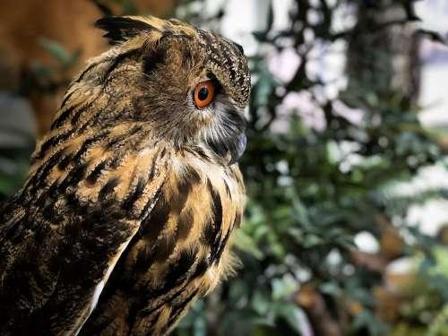 New Birds Feather Blind Now Owl Elegant Bud