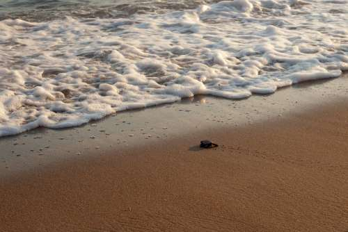 New Life Turtle Baby Turtle Beginnings Leaving Home