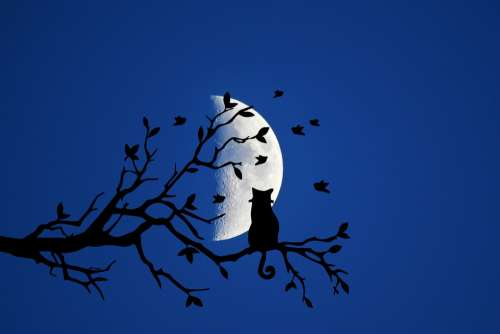 Night Moon Cat Branch Mystical Silhouette