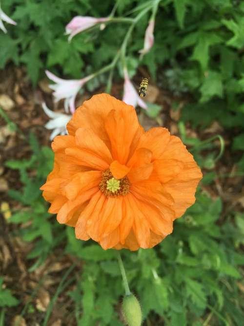Orange Bloom Flower Nature Plant Spring Romantic