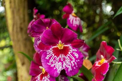 Orchid Nature Flower Flora Tropical Plant