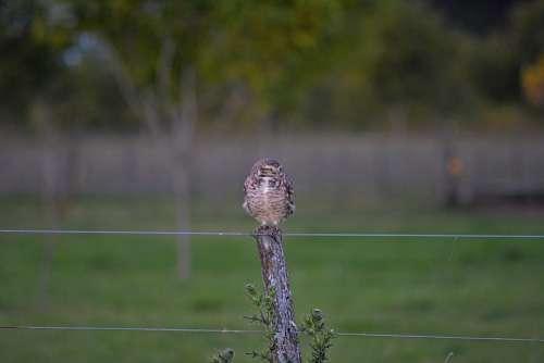 Owl Ave Nature Animals Plumage Peak Beautiful