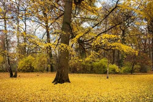 Palace Autumn Leaves Building Park Travel