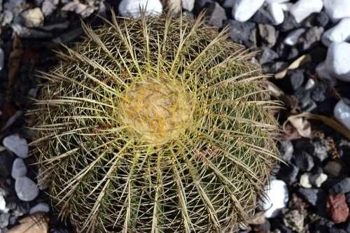 Park Plant Green Cactus Nature Botany Natural