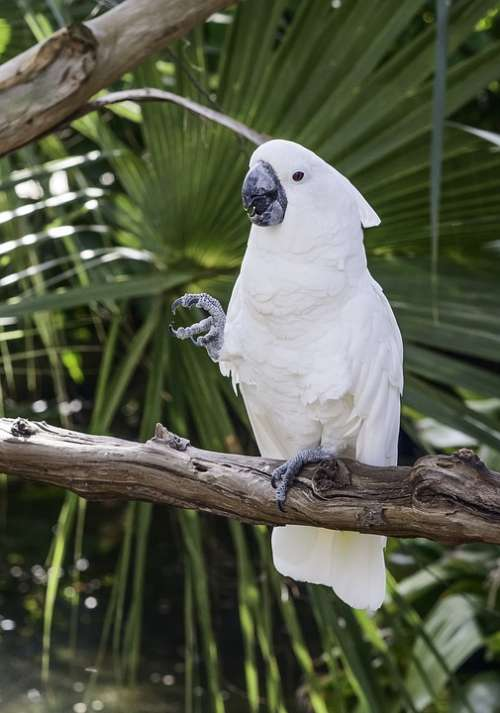 Parrot Bird White Animal Exotic