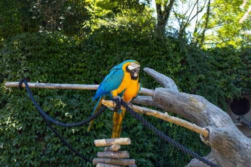 Parrot Color Colorful Plumage Nature Exotic Macaw