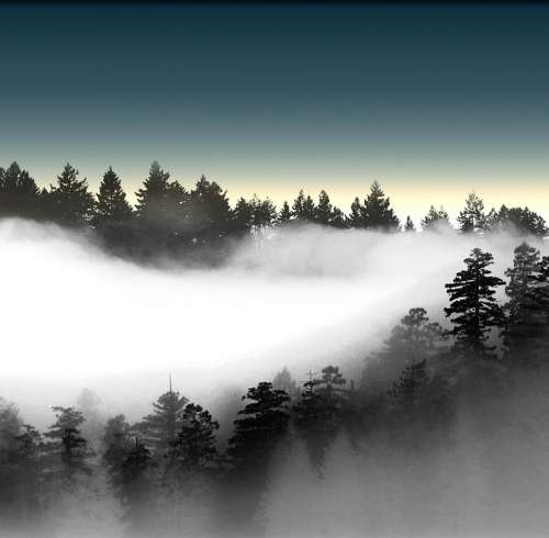 Pines Foggy Landscape Mountain Scene Dawn Misty