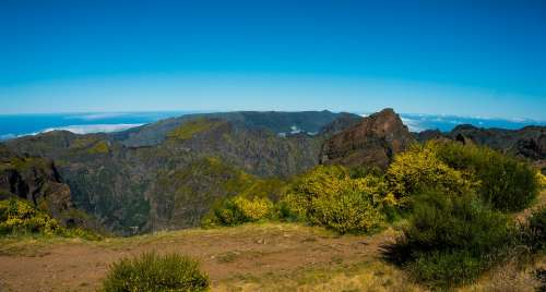 Plateau Madeira Broom Distant View