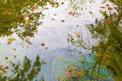 Pond Water Nature Mirroring
